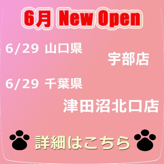 【NEW OPEN】みんにゃの街に続々オープン!